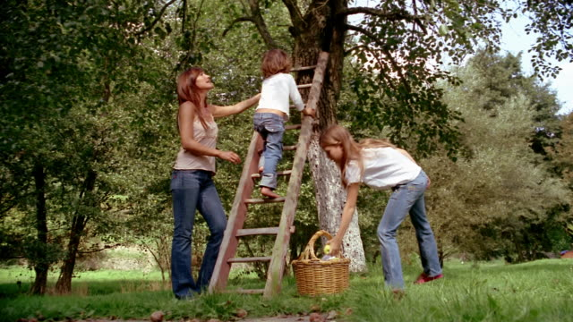 low angle medium shot mother standing by tree as daughter gathers apples and young boy climbs ladder - mela video stock e b–roll