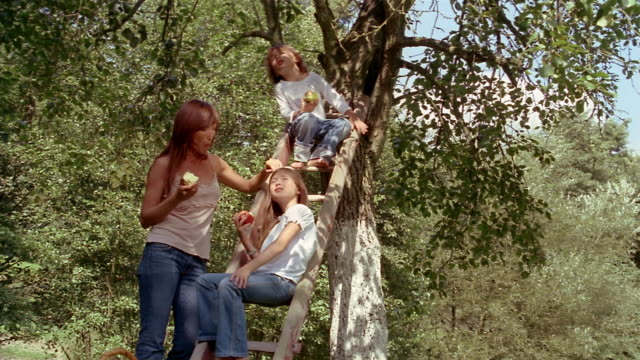 low angle medium shot mother standing near tree as son and daughter sit on ladder / eating apples - ladder stock videos and b-roll footage