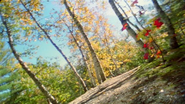 Low angle medium shot rear view of man and woman trail running through woods / Bradbury Mountain, Maine