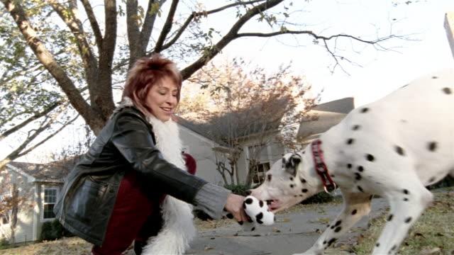 low angle medium shot woman playing with dalmatian on sidewalk - zuschnappen stock-videos und b-roll-filmmaterial