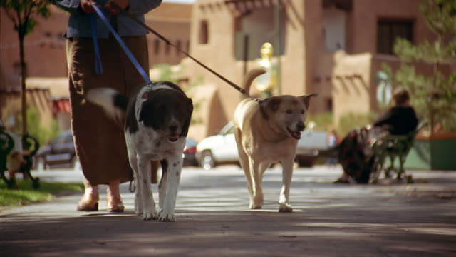 low angle medium shot woman walking two dogs through plaza / santa fe, mexico - 50 59 years stock videos & royalty-free footage