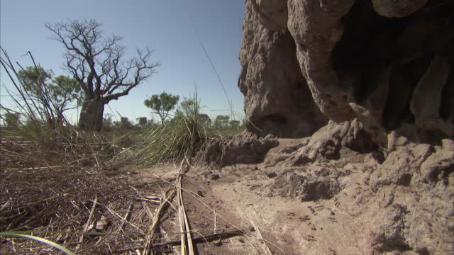 low angle of ants moving through grass land with trees and large rock face in background. - ameise stock-videos und b-roll-filmmaterial