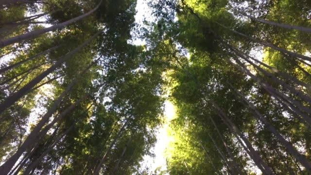 晴れた日の昼間に竹林のローアングル - bamboo plant点の映像素材/bロール