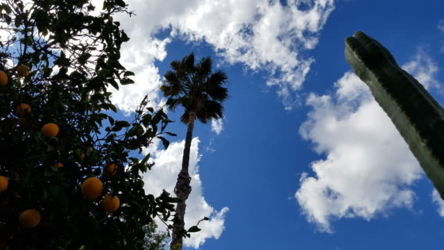 4k low angle of clouds against dark blue sky - palmenblätter stock-videos und b-roll-filmmaterial