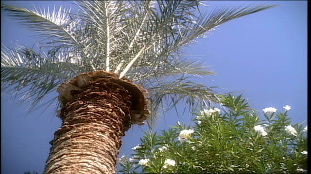 low angle of desert tree against sky in phoenix arizona - natural land state stock videos & royalty-free footage