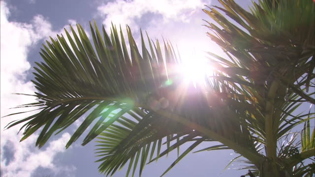 low angle of palm trees - palm tree stock videos & royalty-free footage