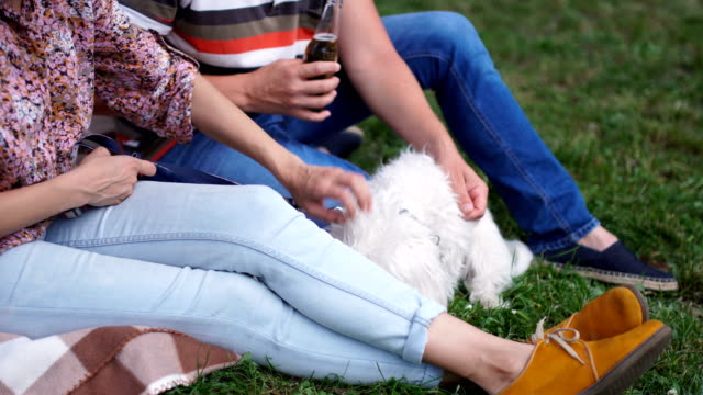 low angle of people playing with a dog - maltese dog stock videos and b-roll footage