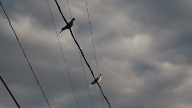 vídeos y material grabado en eventos de stock de low angle of pigeons sitting on wires - two animals