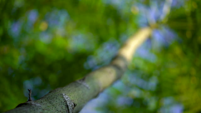 Low angle of tree branch