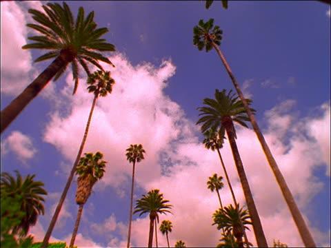 vidéos et rushes de low angle of white time lapse clouds in blue sky over palm trees - angle de prise de vue