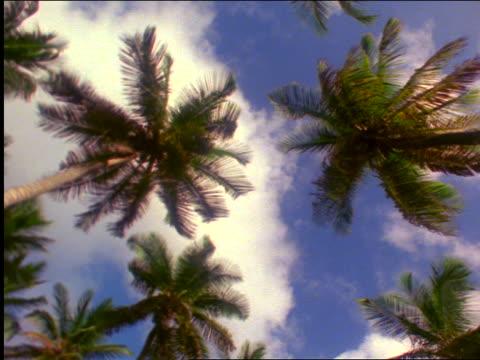 vidéos et rushes de low angle pan palm tress below blue sky with clouds - angle de prise de vue