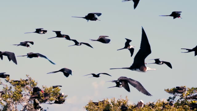low angle panning shot of birds flying against blue sky, animals over trees during sunny day - belize city, belize - パン効果点の映像素材/bロール