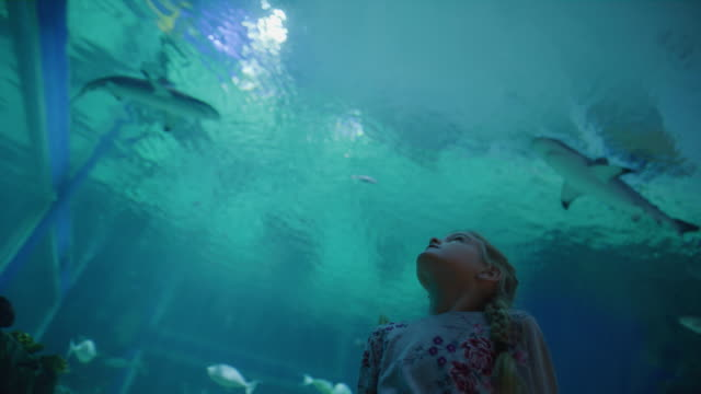 low angle panning shot of girl in aquarium watching fish swimming overhead / draper, utah, united states - aquarium stock videos & royalty-free footage