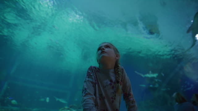 low angle panning shot of girl in aquarium watching fish swimming overhead / draper, utah, united states - weekend activities stock videos & royalty-free footage
