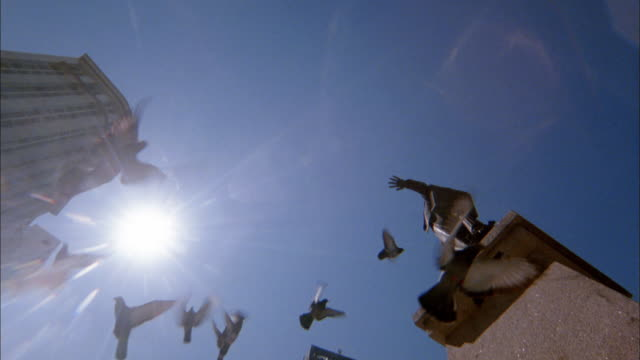 low angle piegons flying against blue skies in square near statue / rio de janeiro - 動物の集まり点の映像素材/bロール