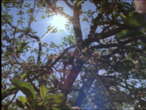 low angle point of view of dogwood trees - dogwood stock videos & royalty-free footage