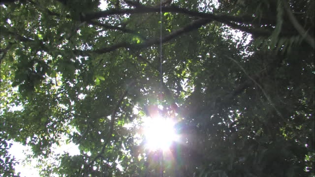 low angle push-in - sunlight beams through tree branches in papua new guinea. / papua new guinea - papua stock videos and b-roll footage