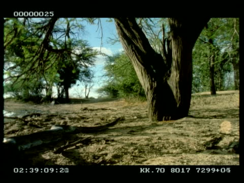 mcu low angle python moving towards and into tree - 長さ点の映像素材/bロール
