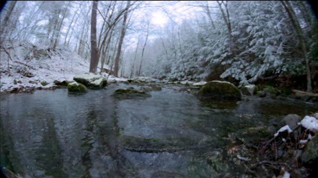 vídeos de stock, filmes e b-roll de low angle rocky stream lined w/trees changing through four seasons / vermont - quatro estações