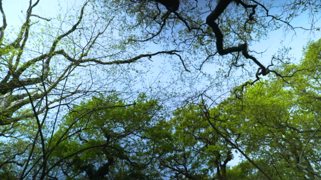 low angle rotating shot of tree branches against blue sky - four seasons stock videos & royalty-free footage
