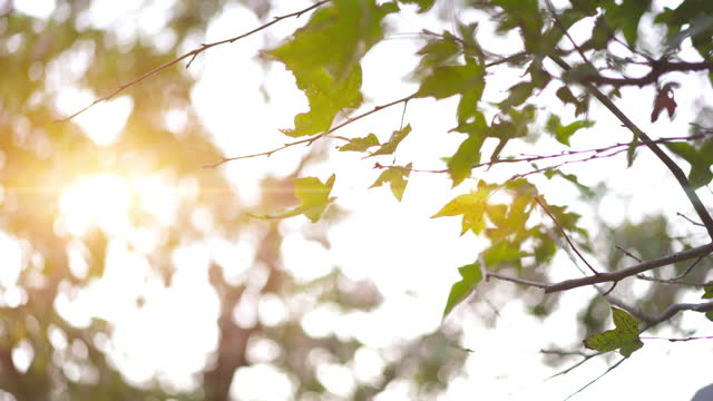 low angle shot by the stabilizer of a leafless tree in the autumn leaves - bare tree stock videos & royalty-free footage