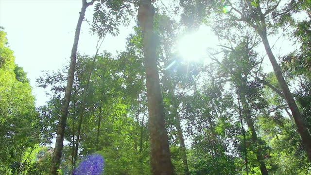 a low angle shot looking up a tree, pov in a tropical rainforest, rotating camera - soft focus stock videos & royalty-free footage