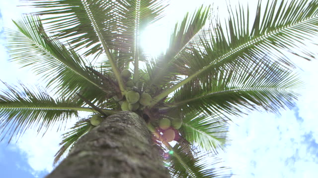 Low angle shot moving around the base of a coconut tree.
