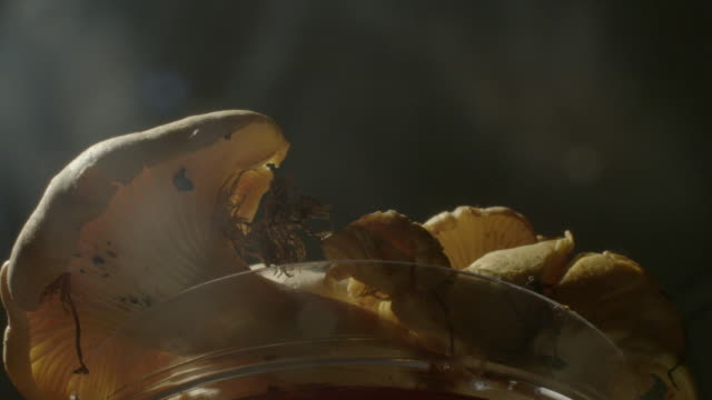 low angle shot of a bowl of mushrooms slowly revolving. - bowl stock videos and b-roll footage