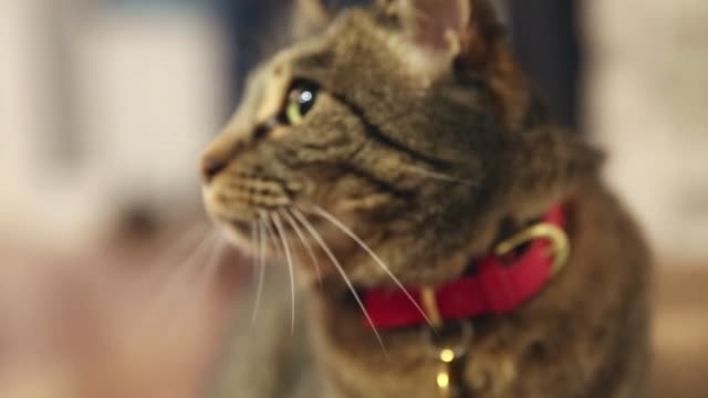 low angle shot of a cat looking around and then looking into camera. - staring stock videos & royalty-free footage