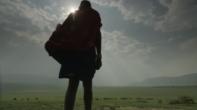 low angle shot of a masai farmer walking towards his cattle in the serengeti national park. - tanzania stock videos & royalty-free footage