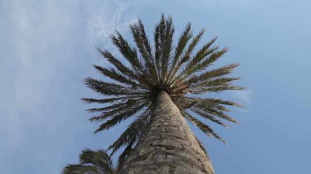 low angle shot of a palm tree. - directly below stock videos & royalty-free footage