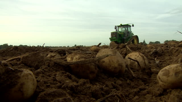 low angle shot of a tractor harvesting potatoes. - agricultural equipment stock videos & royalty-free footage