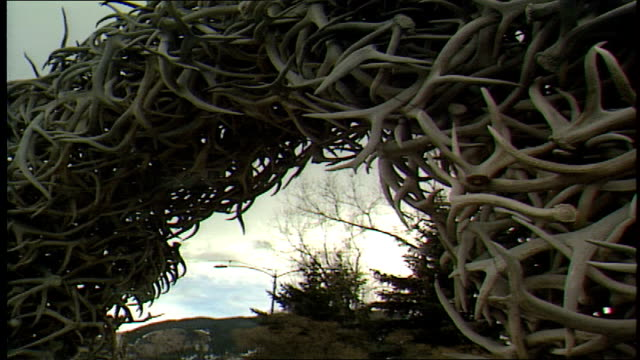 low angle shot of elk anter arches - hooved animal stock videos and b-roll footage