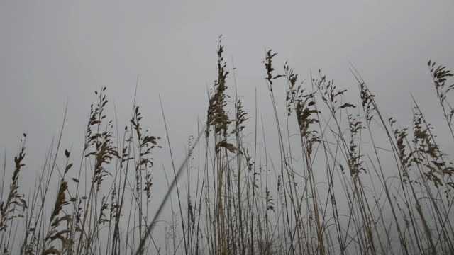 low angle shot of marram grass - marram grass stock videos & royalty-free footage