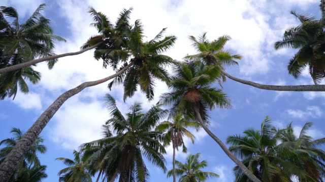 low angle shot of palm trees against the sky - palm tree stock videos & royalty-free footage