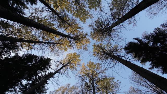 vídeos de stock e filmes b-roll de low angle shot of trees, central park - helsinki, finland. - vista de baixo para cima