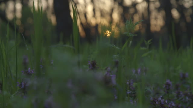 Low angle shot tracking past flowers in a forest glade.