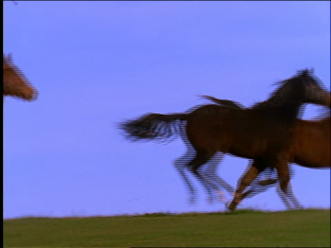 vídeos de stock, filmes e b-roll de low angle slow motion horses running across field - sparklondon