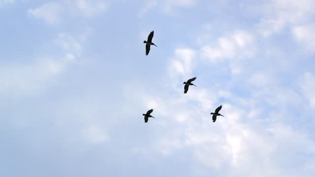 low angle slow motion panning shot of birds flying against blue sky - san francisco, california - fade in video transition stock videos & royalty-free footage