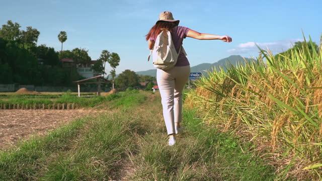 vidéos et rushes de vue au ralenti à angle bas: femme asiatique marchant sur la crête du rizière entre l'oreille de riz et le riz récolté sous le coucher du soleil dans une scène agricole non urbaine, le nord de la thaïlande avec un sentiment excité, émotion positi - non urban scene