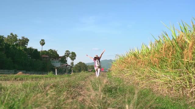 vidéos et rushes de vue au ralenti à angle bas: femme asiatique marchant avec drôle, lever le bras sur la crête du riz paddy entre l'oreille de riz et le riz récolté sous le coucher du soleil dans une scène d'agriculture non urbaine, le nord de la thaïlande avec se - non urban scene