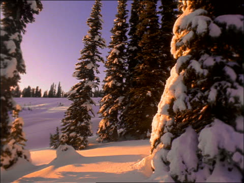 low angle pan of snowy pine trees on side of mountain / washington - pinaceae stock videos & royalty-free footage