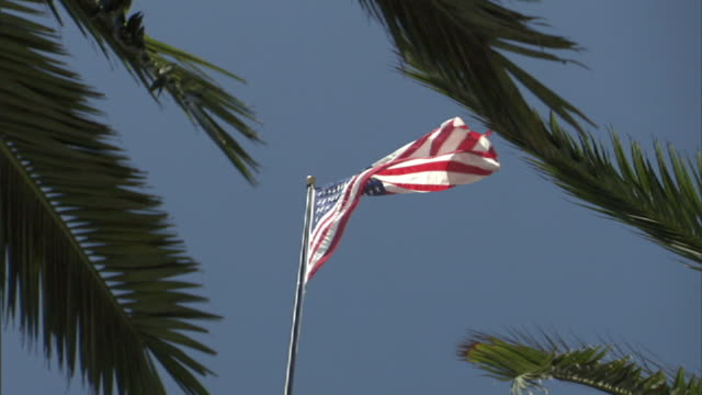 Low Angle static - An American flag waves above palm trees. / San Francisco, California, USA