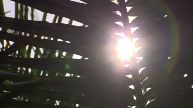 Low Angle static - Palm branches filter bright sunlight. / Malaysia
