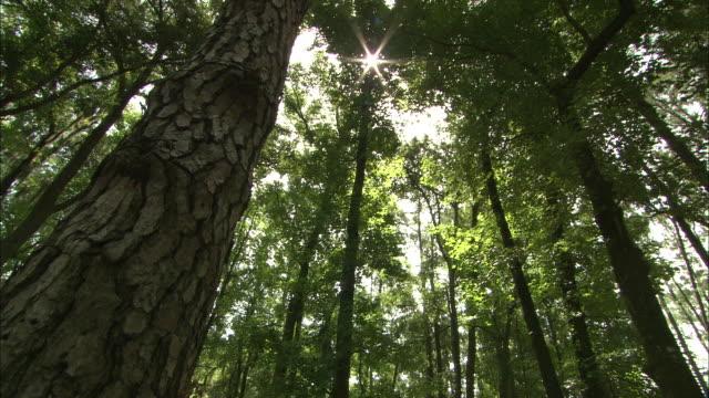 low angle static - sunbeams shine though high treetops around the okefenokee swamp in florida. / florida, usa - オケフェノキー国立野生生物保護区点の映像素材/bロール