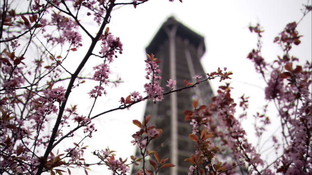 low angle static - the top portion of the eiffel tower looms over pink blossoms waving in the breeze. / paris, france - エッフェル塔点の映像素材/bロール