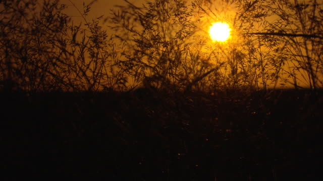 low angle sun low in yellow sky seen through branches of weedy scrub bushes focus pull to blur branches and see barbed wire fence behind