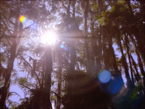 low angle sun peeking through cypress trees with spanish moss in swamp / caddo lake, texas - spanish moss stock videos & royalty-free footage