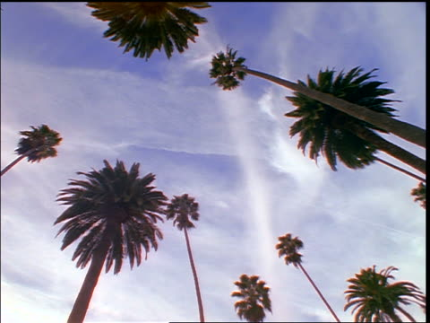 low angle time lapse clouds moving over palm trees / Beverly Hills