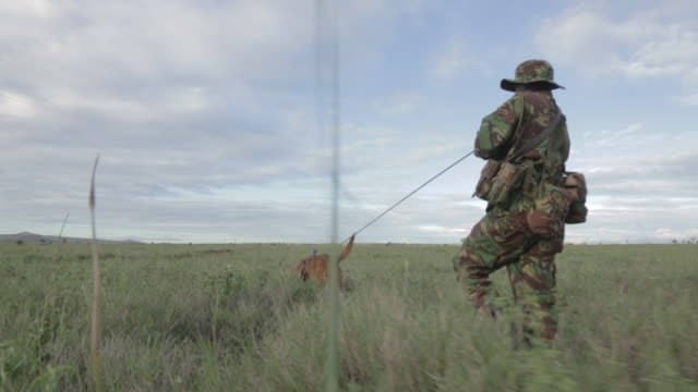 low angle tracking shot following a warden and his bloodhound searching for ivory poachers at the lewa wildlife conservancy, kenya. - 迷彩柄点の映像素材/bロール